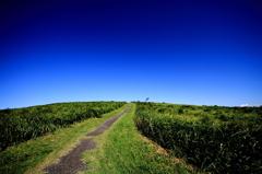 青空に続く道
