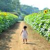 向日葵畑*