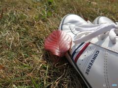 桜紅葉とスニーカー