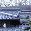 屋根瓦の上の猫