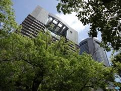 緑と帝国ホテル大阪