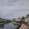 蓬川緑地の桜