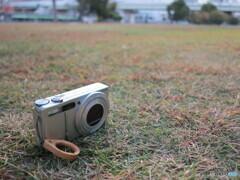 CX5と芝生
