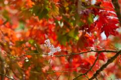 Little Spring Drawn in Autumn