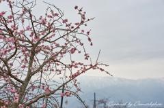 春が来た...かな?