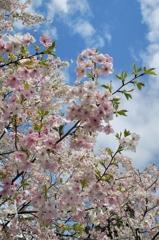 鮮やか春彩