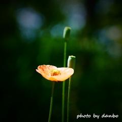 繁栄の花 <9>