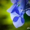 集真藍 <2>