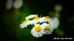 春の野草花 <5-8>