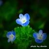 春の野草花 <3-3>