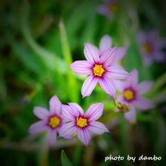 春の野草花 <9-10>