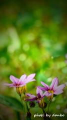 春の野草花 <9-11>