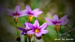 春の野草花 <9-12>