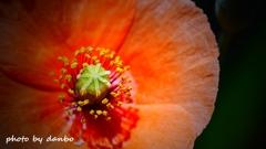 繁栄の花 <8>