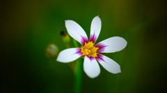 春の野草花 <9-7>