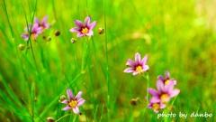 春の野草花 <9-5>