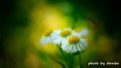 春の野草花 <5-6>