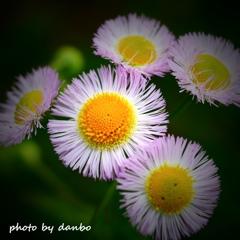春の野草花 <5-7>