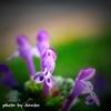 春の野草花 <2-3>