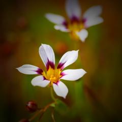 春の野草花 <9-8>