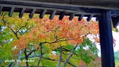 山門と紅葉 <11>