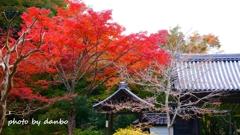 山門と紅葉 <12>