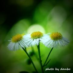 春の野草花 <5-9>