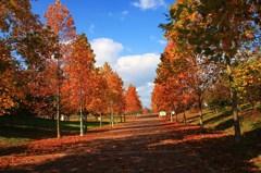 秋空に昇る