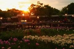 花しょうぶ園の夕暮れ