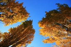 秋空を見上げる