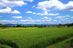 お米の楽園
