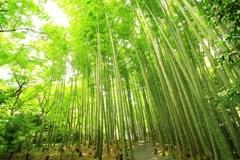 竹林の小路