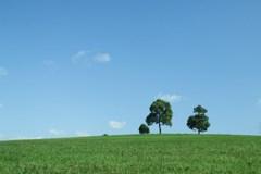 秋晴れの丘