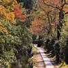 桜葉色づく哲学の道