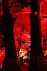 燃える・糺の森