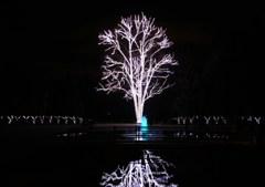 この木なんの木 イルミの木