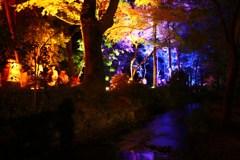 幽玄・糺の森