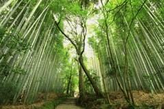 竹林の参道
