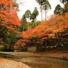 高雄・紅葉を映し流れる清滝川