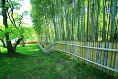 竹林に風が吹く