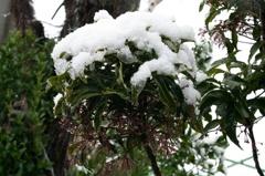 融解と降雪の循環
