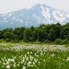 ワタスゲが咲く桑ノ木台湿原