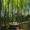 雲昌寺の竹林