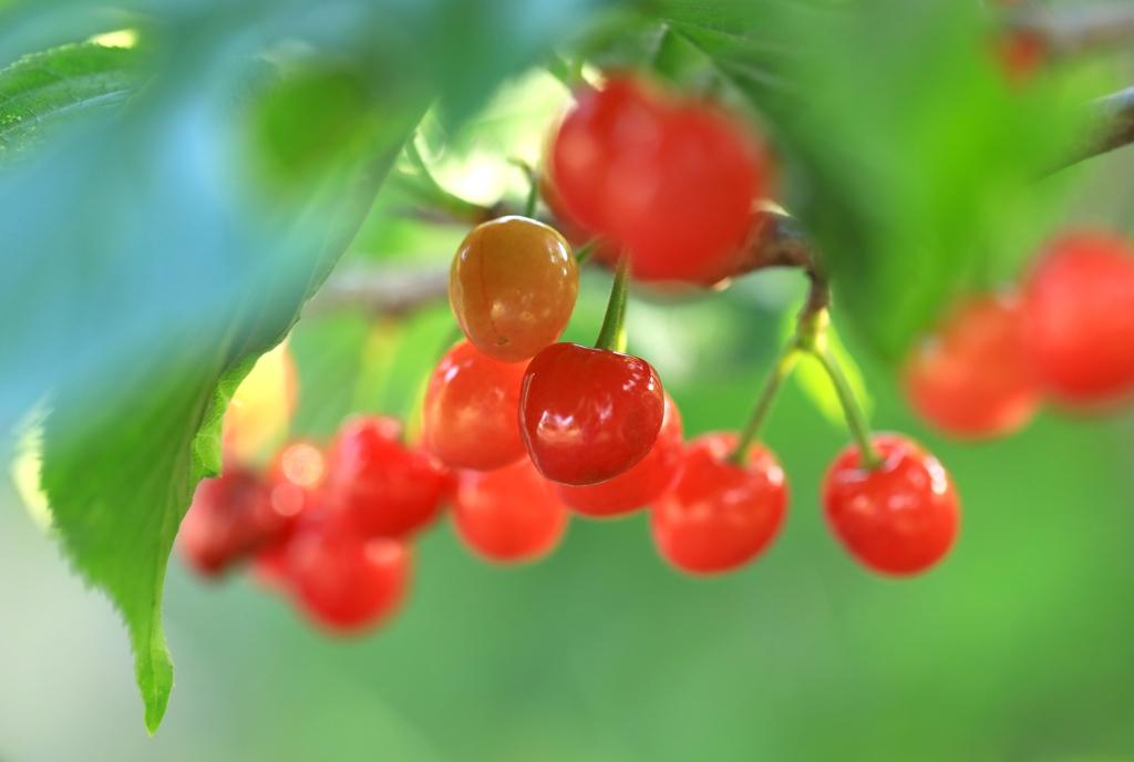 chery その1