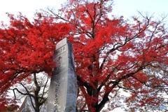 篠山城跡にて2