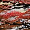 秋色(播磨中央公園)15