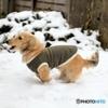 クウちゃん 初めての雪遊び