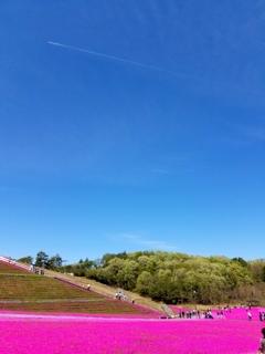 青い空と芝桜