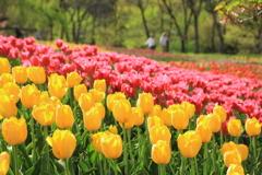 信州花フェスにて2