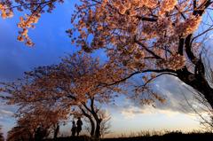 桜堤の家族 Ⅱ